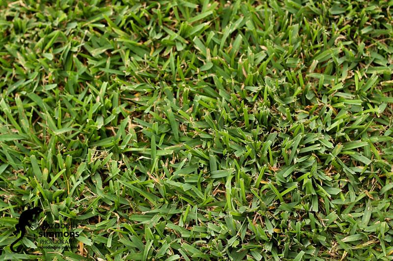 grass blogcopy