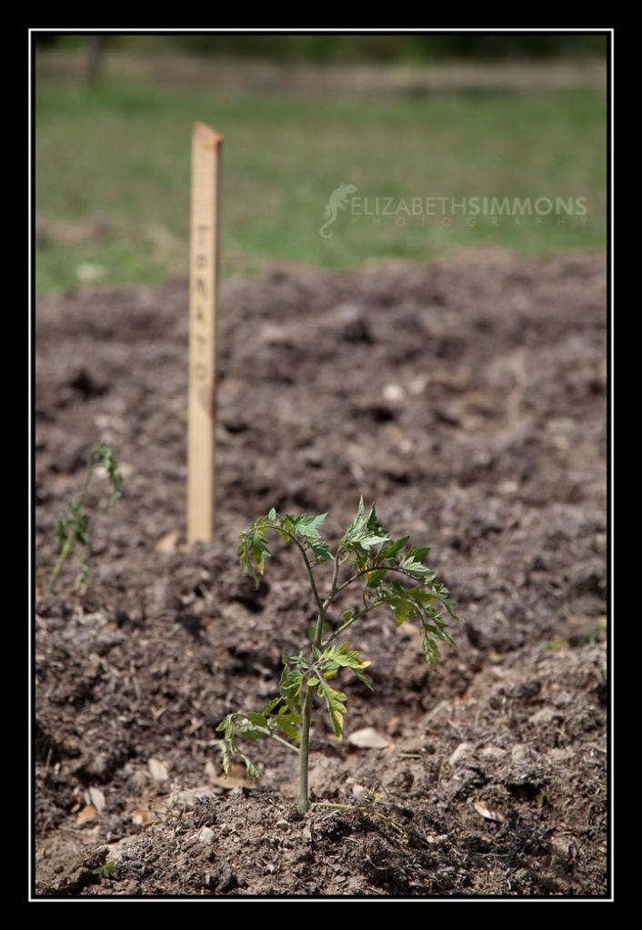 IMG_9493 Plantedcopy