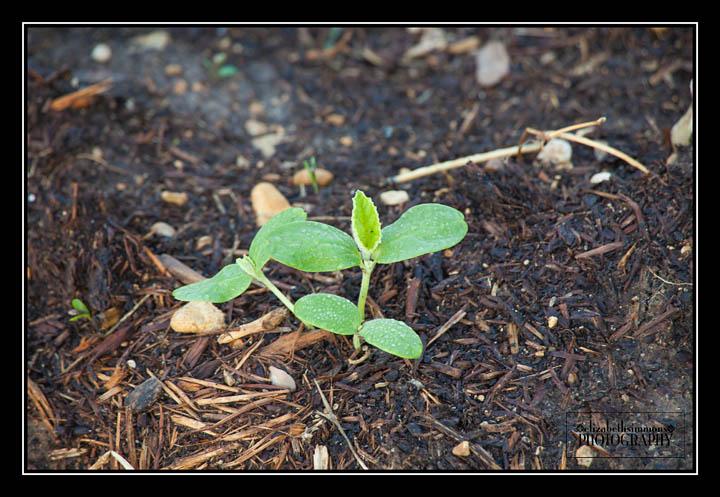 garden2015-11-Edit