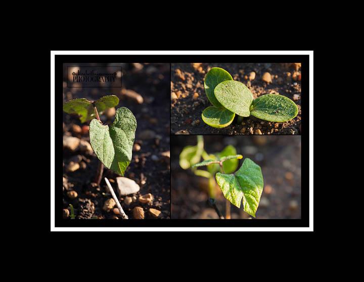 GardenCollage2015
