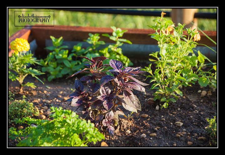 HerbGarden2015-2-Edit